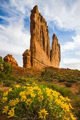 Early morning light shines on the Organ with bright yellow flowers in the foreground at Arches National Park in Utah.