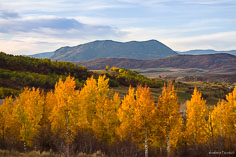 Late day light illuminates a stand of golden aspens on a hillside overlooking the Sleeping Giant in Steamboat Springs, Colorado.