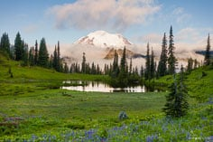 Mount Rainier emerges from early morning clouds and towers over Upper Tipsoo Lake and a meadow sprinkled with wildflowers in Mount Rainer National Park, Washington.