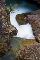 A small tree hangs over Beauty Creek in Jasper National Park, Alberta, Canada.