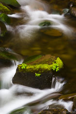 A moss covered rock sits in the stream below Elowah Falls in the Columbia Gorge, outside of Portland, Oregon.