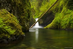 Punchbowl Falls drops in to a pool behind a fallen tree in the Columbia Gorge, outside of Portland, Oregon.