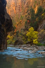 Fall colors compliment the red rock and reflect in the water of the North Fork of the Virgin River as it flows through the Narrows at Zion National Park in Utah.