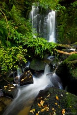 Horseshoe Falls flows through lush greenery on the South Island of New Zealand.