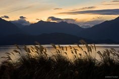 A golden sunset reflects in Lake Tahoe behind a stand of native toetoe grasses outside of Ta Anua in New Zealand.