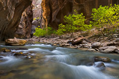 The North Fork of the Virgin River winds through the canyon walls of the Narrows in Zion National Park, Utah.