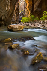 The trees begin to turn gold in the Narrows of the North Fork of the Virgin River in Zion National Park, Utah.
