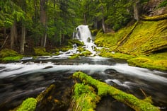 The Rogue River emerges from dense woods and flows over Rough Rider Falls before fanning out in a mossy glen in the Rogue River National Forest in southern Oregon.