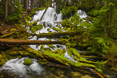 Clearwater Falls cascades down through a jumble of moss covered rocks and fallen logs in the Umpqua National Forest in southern Oregon.
