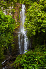 Honolewa Stream emerges from thick vegetation and gracefully tumbles down Paihi Falls outside of Hana on the Hawaiian Island of Maui.
