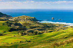 The lush green terrain meets the sea at Sandfly Bay on the South Island in New Zealand.