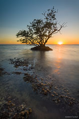 A lone mangrove tree stands silhouetted against the setting sun on a shallow rocky shoreline outside of Everglade City, Florida.
