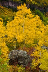 All the colors of Colorado in the fall are presented on a hillside outside of Telluride, Colorado.