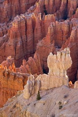 A white rock formation stands out in front of the other orange and red formations of Bryce Canyon National Park in Utah.