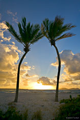 The sun rises between two graceful palm trees at Merrywing Bay in Anguilla, BWI.