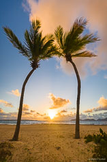 The sun rises over the horizon between two palm trees on Merrywing Bay in Anguilla, BWI.