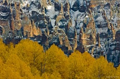 Golden aspens contrast with a red rock face dusted with snow aoutside of Ridgway, Colorado.