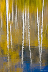 A slight breeze creates ripples in the reflection of brilliant gold aspens at Woods Lake in southern Colorado.