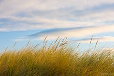 Sea breezes gently blow the grasses along the coast of the South Island in New Zealand.
