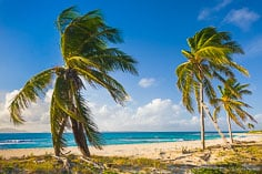Palm trees along Merrywing Bay in Anguilla, BWI.