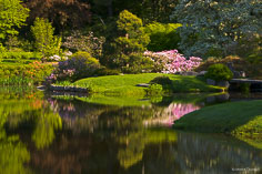 Colorful flowers reflect in a pond at Asticou Azalea Garden in northeast Maine.