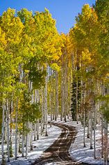 A road winds through a snowy stand of multicolored aspens high up along County Road 8 in the Flat Top Mountains in northwestern Colorado.