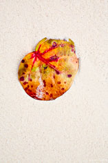 A colorful sea grape leaf washed up on the white sand beach in Anguilla, BWI.