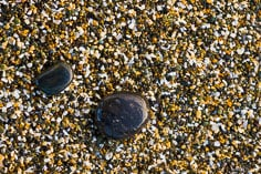 A pair of polished pebbles lay in the coarse rocky sand outside of Riverton on the South Island of New Zealand.