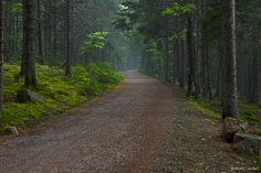 A carriage road curves through the misty forest in Acadia National Park, Maine.