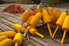 Bright yellow lobster bouys on a dock in Port Clyde, Maine.