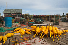 Bright yellow lobster bouys and stacks of traps  on a dock in Port Clyde, Maine.