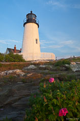 Pink flowers grow on the rocky hillside in front of Pemaquid Point Light in northeast Maine.